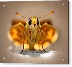 Acrylic Print featuring the painting Cute And Curious Brown Butterfly by Tracie Kaska