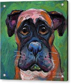 Cute Boxer Puppy Dog With Big Eyes Painting Acrylic Print by Svetlana Novikova