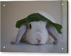 Cute Bunny Acrylic Print by Nikki  Wang