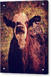 Cute Calf Grunge Acrylic Print by Cassie Peters