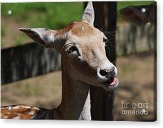 Cute Deer Acrylic Print by DejaVu Designs