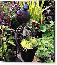 Cute Insect Planter! #plants #planters Acrylic Print