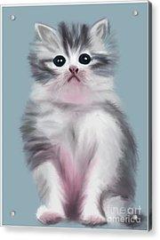 Cute Kitten Acrylic Print
