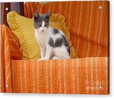 Acrylic Print featuring the photograph Cute Kitty by Vicki Spindler