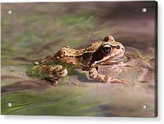 Cute Litte Creek Frog Acrylic Print