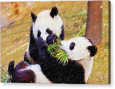 Acrylic Print featuring the painting Cute Pandas Play Together by Lanjee Chee