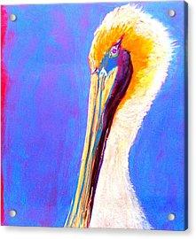 Cute Pelican Acrylic Print