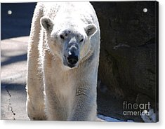 Cute Polar Bear  Acrylic Print by DejaVu Designs