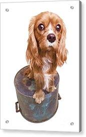 Cute Puppy Card Acrylic Print by Edward Fielding