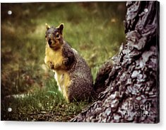 Cute Squirrel Acrylic Print