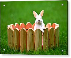 Cute White Rabbit  Acrylic Print by Lanjee Chee
