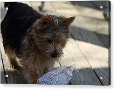 Cutest Dog Ever - Animal - 011311 Acrylic Print by DC Photographer