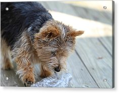 Cutest Dog Ever - Animal - 011313 Acrylic Print by DC Photographer