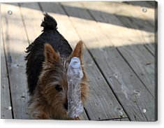 Cutest Dog Ever - Animal - 011319 Acrylic Print by DC Photographer