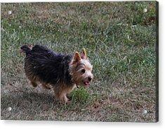 Cutest Dog Ever - Animal - 011345 Acrylic Print by DC Photographer