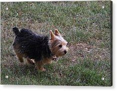 Cutest Dog Ever - Animal - 011346 Acrylic Print