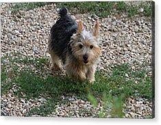 Cutest Dog Ever - Animal - 011347 Acrylic Print by DC Photographer