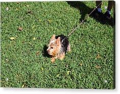 Cutest Dog Ever - Animal - 011349 Acrylic Print