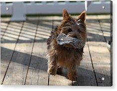 Cutest Dog Ever - Animal - 01139 Acrylic Print