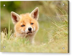 Cutie Face _red Fox Kit Acrylic Print