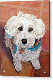 Cutie With Bandana Acrylic Print by Julie Maas