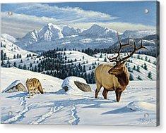 Cutoff Mountain -  Elk And Coyote   Acrylic Print by Paul Krapf