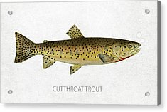 Cutthroat Trout Acrylic Print by Aged Pixel