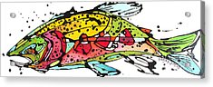 Cutthroat Trout Acrylic Print by Nicole Gaitan