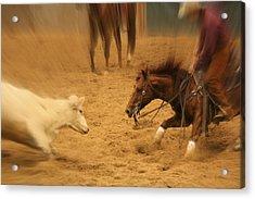 Cutting Horse 8 Acrylic Print