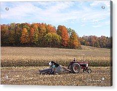 Cutting The Corn Acrylic Print