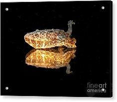 Cuttle Fish Reflections Acrylic Print by Soren Egeberg