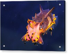 Cuttlefish Acrylic Print by Kristi Schmit