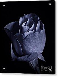 Cyan Rose Portrait Acrylic Print