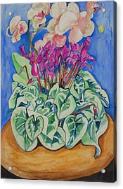 Cyclamen And Orchids In A Flower Pot Acrylic Print by Esther Newman-Cohen