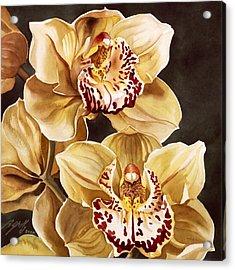 Cymbidium Orchids Acrylic Print by Alfred Ng