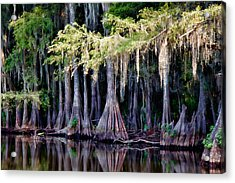 Cypress Bank Acrylic Print by Lana Trussell