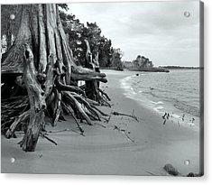 Cypress Bay Acrylic Print by Deborah Smith