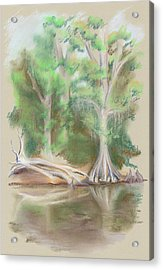Cypress By The Waccamaw River Acrylic Print by MM Anderson