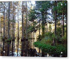 Acrylic Print featuring the photograph Cypress Gardens 2 by Ellen Tully