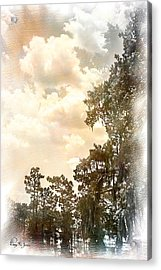 Swamp - Louisiana - Cypress Heaven Acrylic Print by Barry Jones