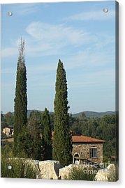 Cypress In Rapolano Acrylic Print