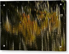 Cypress In Reflection Acrylic Print by Andy Crawford