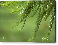 Acrylic Print featuring the photograph Cypress In The Mist - Art Print by Jane Eleanor Nicholas