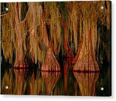Cypress Maze Acrylic Print by Kimo Fernandez