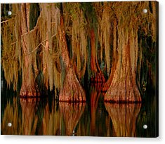 Cypress Maze Acrylic Print
