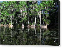 Cypress On Rainbow Acrylic Print by Bob Jackson