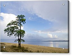 Acrylic Print featuring the photograph Cypress On The Neuse by Bob Decker