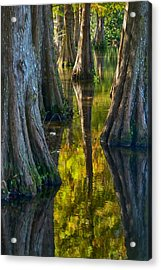 Cypress Reflections Acrylic Print by Rob Wilson