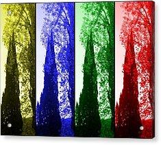 Cypress Acrylic Print by Rick Todaro