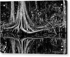 Cypress Roots - Bw Acrylic Print by Christopher Holmes
